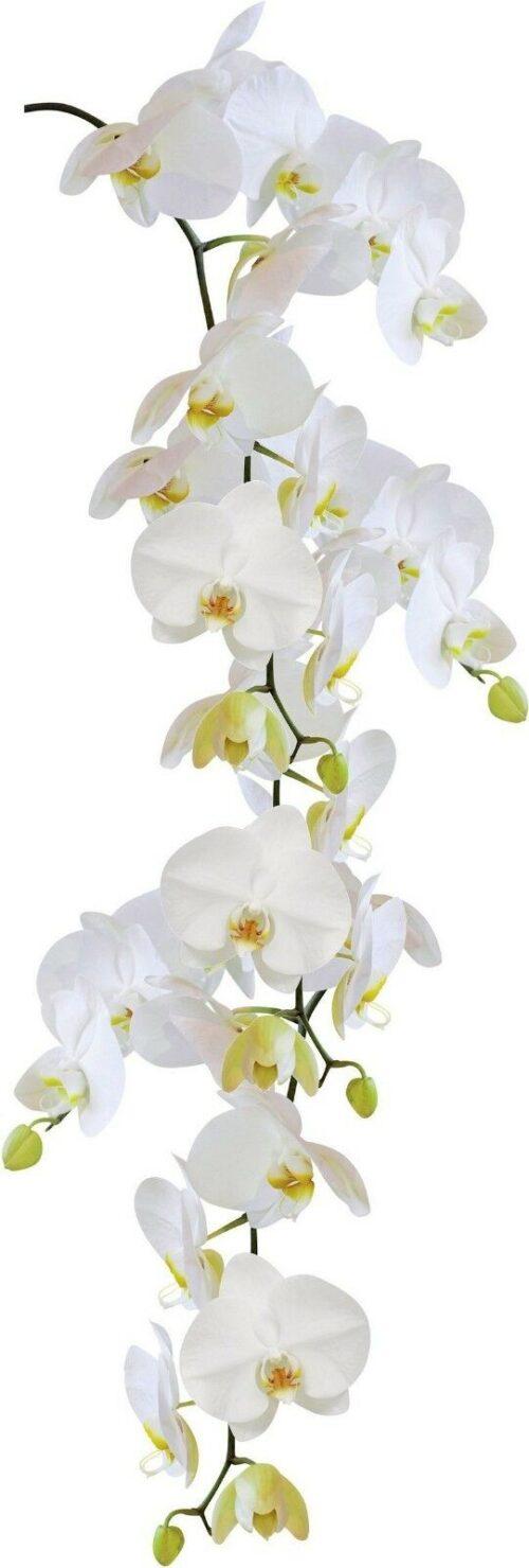 KLEINE WOLKE Wandfolie Statics Orchid B619987 UVP 17,99€ | KLEINE WOLKE Wandfolie Statics Orchid UVP 1799 B619987 232610728927